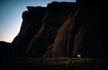 White Horse, Arizona 1960