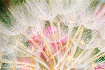 •Parachute Flowers 1967