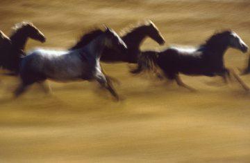 Motion Horses