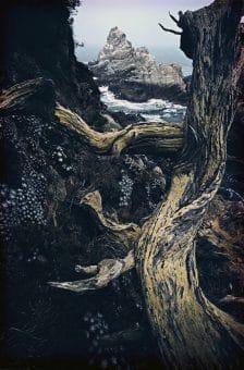 Point Lobos, California c.1960
