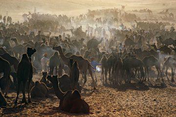 Camel Fair, Pushkar, Rajastan 1972