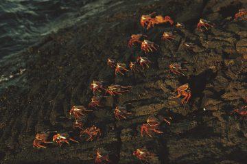 Galapagos 1969