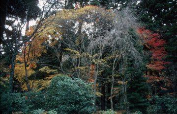 Kyoto, Japan 1981